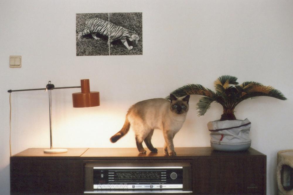 cat+radio+miles
